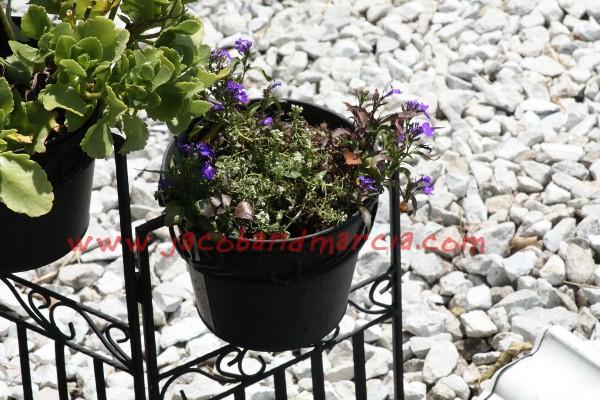 flowerspot
