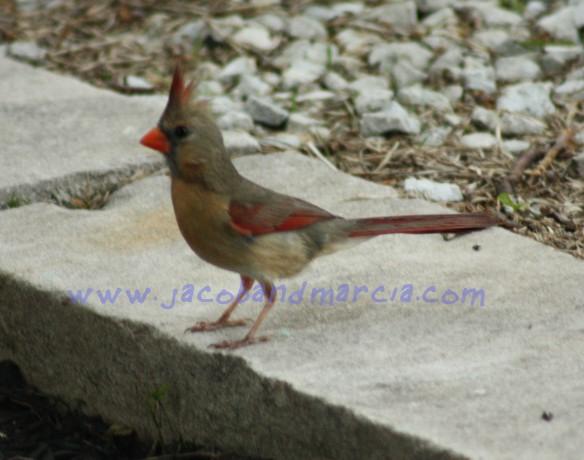 yooung-cardinal